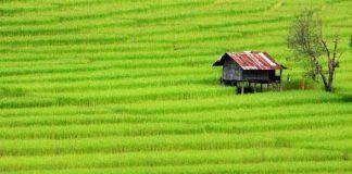 pendapatan petani
