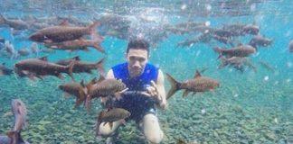Ikan Dewa